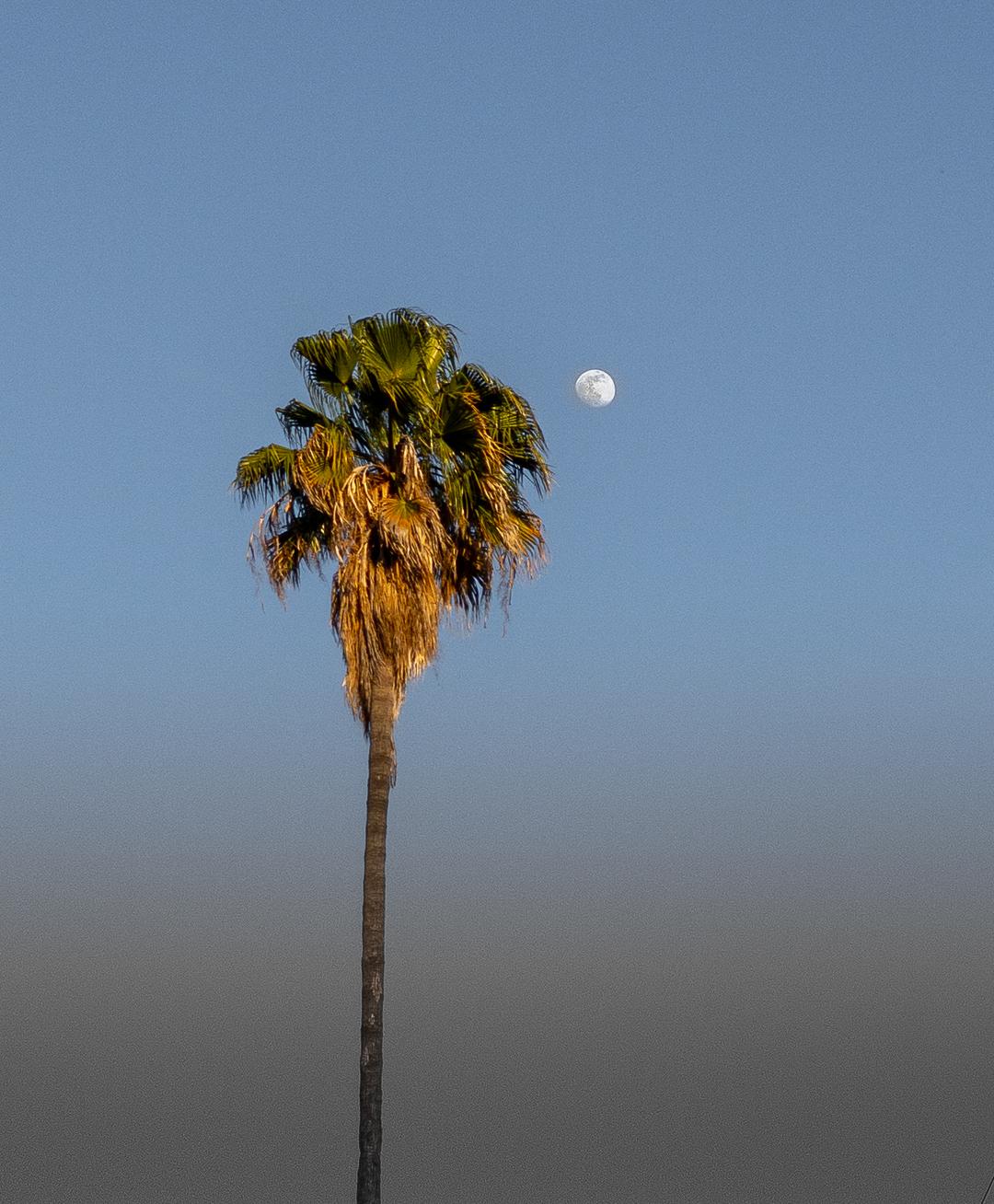 Moon over Los Gatos